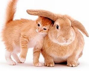 Характеристика людей, рожденных в год кролика