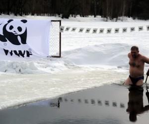 Директор WWF устроил заплыв в московском пруду в защиту обитателей Арктики