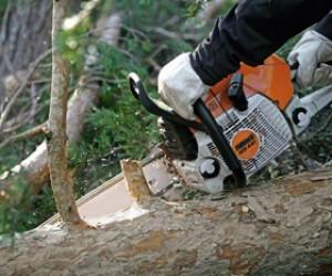 В подмосковном Жуковском вырубают вековой Цаговский лес