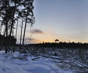 Цаговский лес: лучше поздно, чем никогда