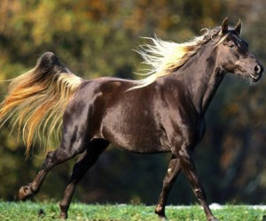 В Подмосковье пройдёт масштабный фестиваль «День лошади»