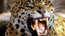 В Подмосковье на мальчика напал цирковой гепард. Ребёнок в тяжелейшем состоянии