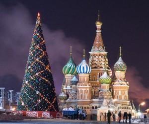 На Новый год Кремль украсит 30-метровая Подмосковная ель