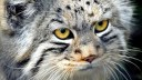 150 тысяч руб. получит автор талисмана для Московского зоопарка