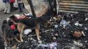 Живодёры сожгли московский приют для бездомных животных