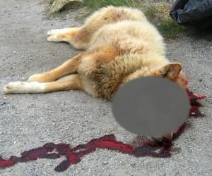 Живодёры продолжают расправы над собаками на территории МГУ