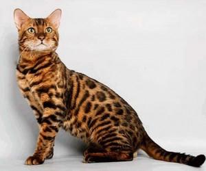 Вор-домушник украл кота за 120 тыс. рублей