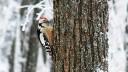 На юго-востоке Москвы появится большой птичий парк