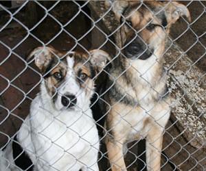 Из столичных приютов для животных бесследно исчезли тысячи собак