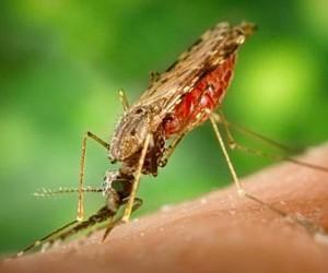 В столичных зонах отдыха обнаружены малярийные комары