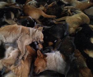 Более сотни убитых собак обнаружены в лесу Подмосковья возле ММК