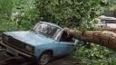 В Москве ураган повалил деревья