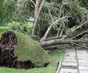 Из-за урагана москвичку насмерть задавило упавшее дерево