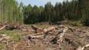 Борьба вокруг прокладки трассы через Москворецкий парк продолжается