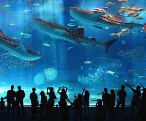 В Москве откроется огромный Океанический парк развлечений