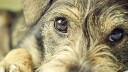 В столице появится передвижная собачья ярмарка