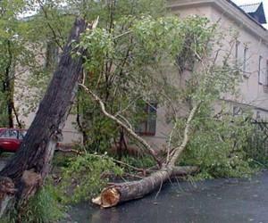 В Москве упавшее дерево убило женщину