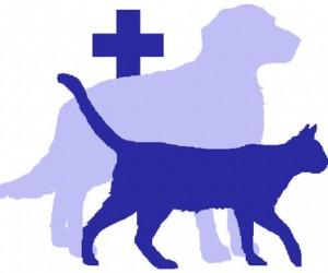 Для домашних животных разработают стандарт ветеринарной помощи