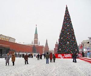 Главную ёлку России выберут в подмосковном лесничестве Наро-Фоминского района