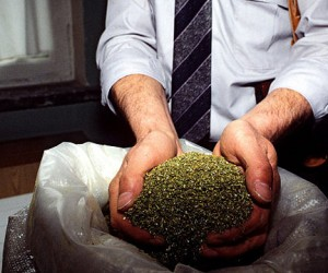 Сотрудники столичного наркоконтроля нашли заготовки для тонны «спайса»