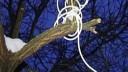 В парке города Видное Московской области повесились два человека