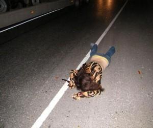 Водитель сбежал с места преступления, оставив потерпевшую на произвол судьбы