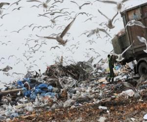 В Москве украли деньги, предназначенные на утилизацию отходов