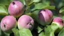 На Садовом кольце высадят плодовые деревья