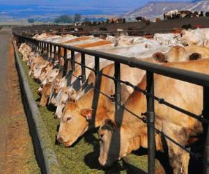 В Москве прошла конференция о проблемах животноводства