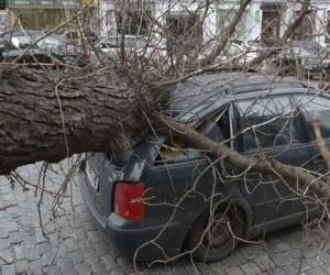 В центре Москвы из-за упавшего дерева пострадало три автомобиля