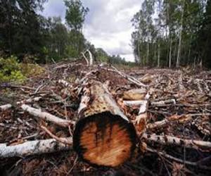 Для трассы Москва-Петербург вырубят новгородский лес