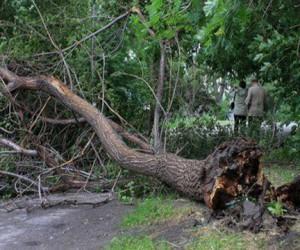 В Москве на женщину упало дерево