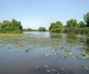 Здоровый биоценоз залог здоровой воды в Волге