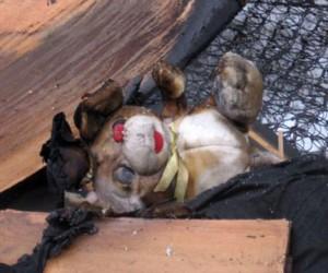 Двухлетний ребенок погиб при пожаре в Москве