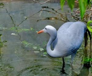 В московском зоопарке пополнение: у журавлей редкой породы вылупился птенец