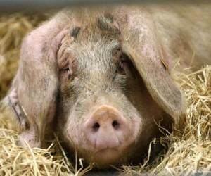 В Москве снова зафиксирован случай бешенства животного