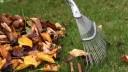 В Москве работники коммунальных хозяйств будут платить штрафы за опавшие листья