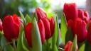 В столице накануне 8 Марта возросли продажи цветов