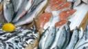 В Москве проходит фестиваль «Рыбная неделя»