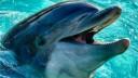 В Москве открывается новый дельфинарий
