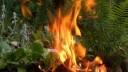 Москва готова к борьбе с природными пожарами
