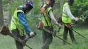 Участники проекта «Активный гражданин» будут определять новые правила покоса травы на газоне