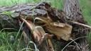 Из-за сильного ветра в столице повалены деревья