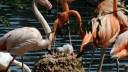 В Московском зоопарке появился на свет первый в этом году птенец фламинго