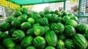 В столице начинается сезон продажи бахчевых