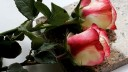 Москвичам предложат услугу «гроб в аренду»